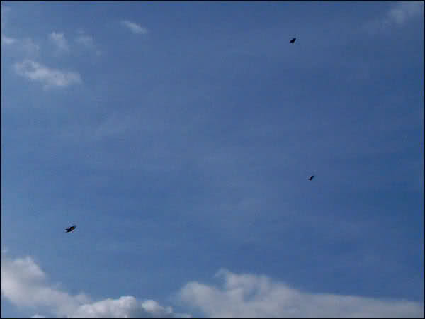 Kites in a Chemical Sky